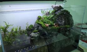 水草造景新手第一个水陆缸