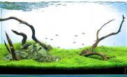 水族箱造景新人报道水草缸来个两张流沉木杜鹃根青龙石水草泥沉木杜鹃根青龙石水草泥沉木杜鹃根青龙石水草泥