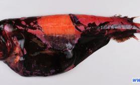 揭秘新西兰深海新物种(多图)