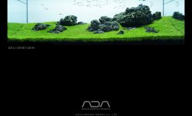 "IAPLC 2015 ADA参赛作品""天際""水草缸World Ranking 341(附上过程和心得) 水族箱"