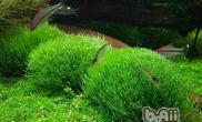水草种植前的修剪方法