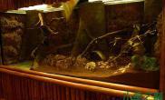 角蛙水陆缸