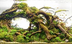 沉木水草造景欣赏一(60cm)