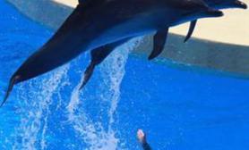 海豚医生帮助自闭儿童(图)