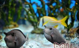 停电应如何为热带鱼保温