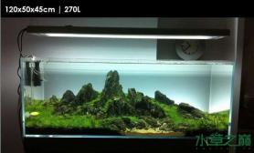 水草造景作品:水草造景(120cm)-51