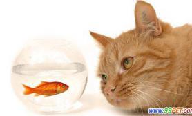 外出旅游家里的宠物怎么办问答(图)