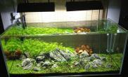 还是那个120缸水草缸藻没了水草更绿了沉木杜鹃根青龙石水草泥