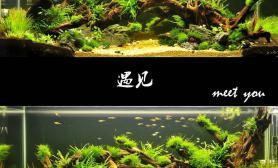 水草造景【千寻杯造景比赛+大缸组】:遇见
