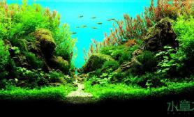 水族箱造景2013年AAC水草造景大赛[泰国] 后续
