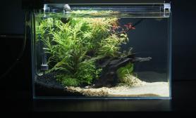 记录一个40缸的成长沉木杜鹃根青龙石水草泥