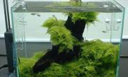 水草缸爆藻和控藻之我见