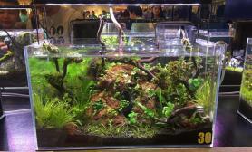 Dymax杯菲律宾2017水草造景比赛参赛作品欣赏