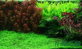 荷兰式造景水草缸有没有喜欢的
