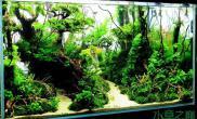 水族箱造景超赞的热带雨林水草缸鱼缸水族箱
