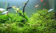 元旦草籽开缸水草缸四个月了鱼缸水草造景水族箱