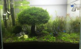 开缸2月丝藻爆缸怎么除?