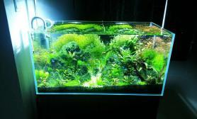 水草造景心中自有一抹绿意——草缸成景篇
