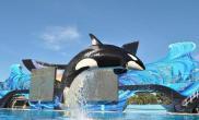美虎鲸重伤动物园被起诉奴役动物(多图)