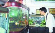 如何科学地养殖观赏鱼(图)