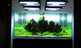 120x120x55cm~水景缸分享鱼缸水族箱鱼缸水族箱鱼缸水族箱