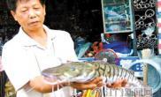 这条有漂亮虎斑纹的鱼是什么鱼(图)