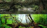 艺术源于生活水草缸灵感取自现实水草缸教你造景构图时的一些思路
