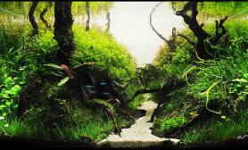 小缸大景深林深处大师水草造景精品