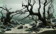 美景分享--霸气的沉木造景