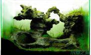 水族箱造景水草造景--毕加索的梦想之地