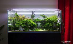 珊瑚MOSS 沉木造景150CM超白缸