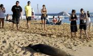 夏威夷设海豹日光浴专区(多图)
