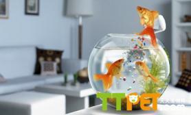 金鱼喜欢吃什么