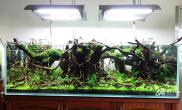 CAA2015ADA世界水草造景大赛金奖《秘境》