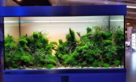 欧洲水草造景艺术大赛大缸组250升草缸作品欣赏
