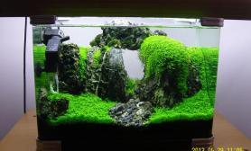 水草缸造景沉木水草泥化妆砂青龙石45CM及以下尺寸设计41