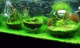 鱼缸造景趣味造景一张流