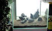 大年初二翻缸水草缸现在算是成景了