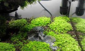 水草造景又过了一周水草缸更新中水草缸我的小草缸