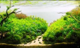 水草造景【龙巅水草第二届造景大赛】+落花流水