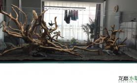 鱼缸造景请问各位这两种杜鹃根造景骨架哪个相对较好?