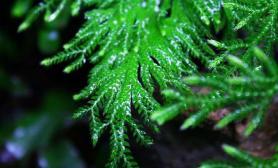 水草造景水陆缸植物