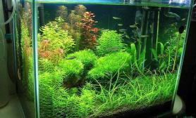简单的水草缸