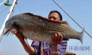 渔民捞到1.15米大鮸鱼(图)