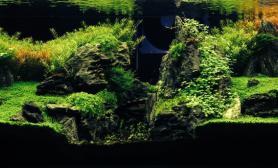 水草缸造景沉木水草泥化妆砂青龙石150CM及以上尺寸设计67