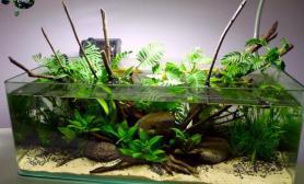 沉木青龙石原生态鱼缸05