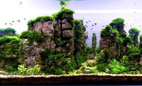 大量青龙石造景案例欣赏收藏