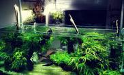 造景一流水草缸状态一流水草缸拍照技术也是一流鱼缸水族箱