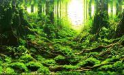 水草造景(120CM)作者杨雨帆作品名《寻踪》