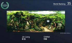 CAA图片 2015世界水草造景大赛 NO:35 《风灵洞》